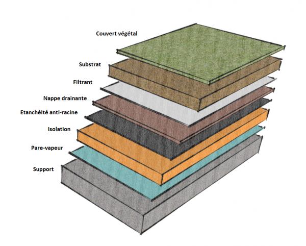 Coupe toiture végétalisée couches composantes Amaeva