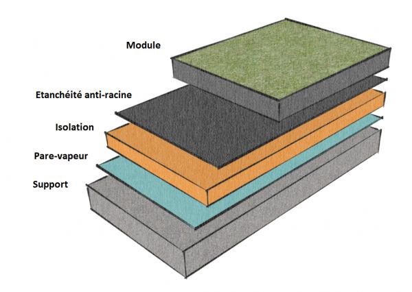 Coupe toiture végétalisée modulaire couches composantes Amaeva